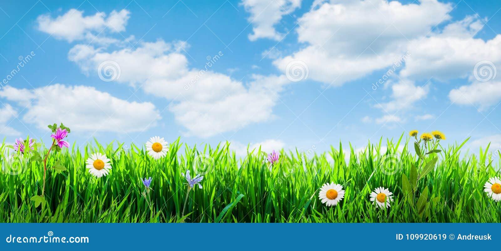 Frühlingsgrashintergrund