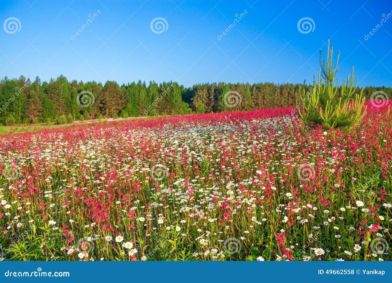 fr hlingslandschaft mit blumen auf einer wiese stockfoto bild von field land 49662558. Black Bedroom Furniture Sets. Home Design Ideas