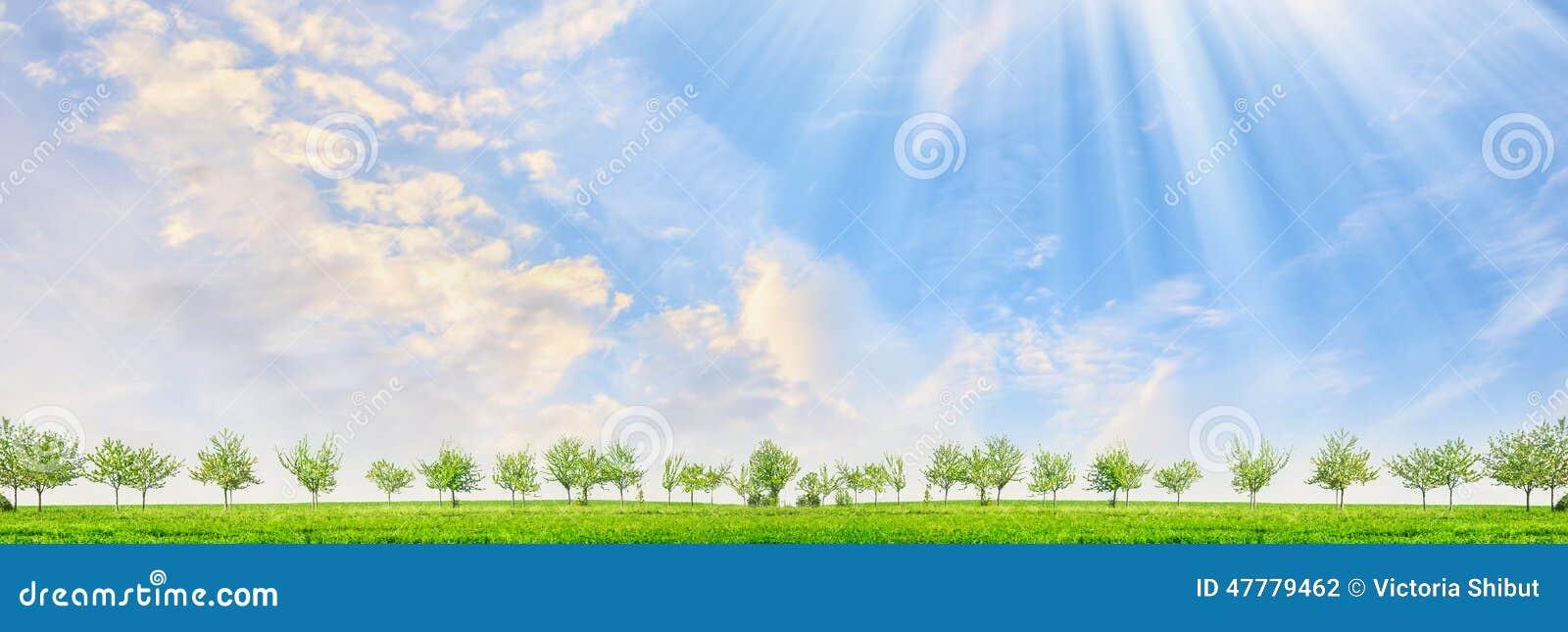Frühlingslandschaft mit jungen Bäumen und Sonne strahlt auf Hintergrund des blauen Himmels aus
