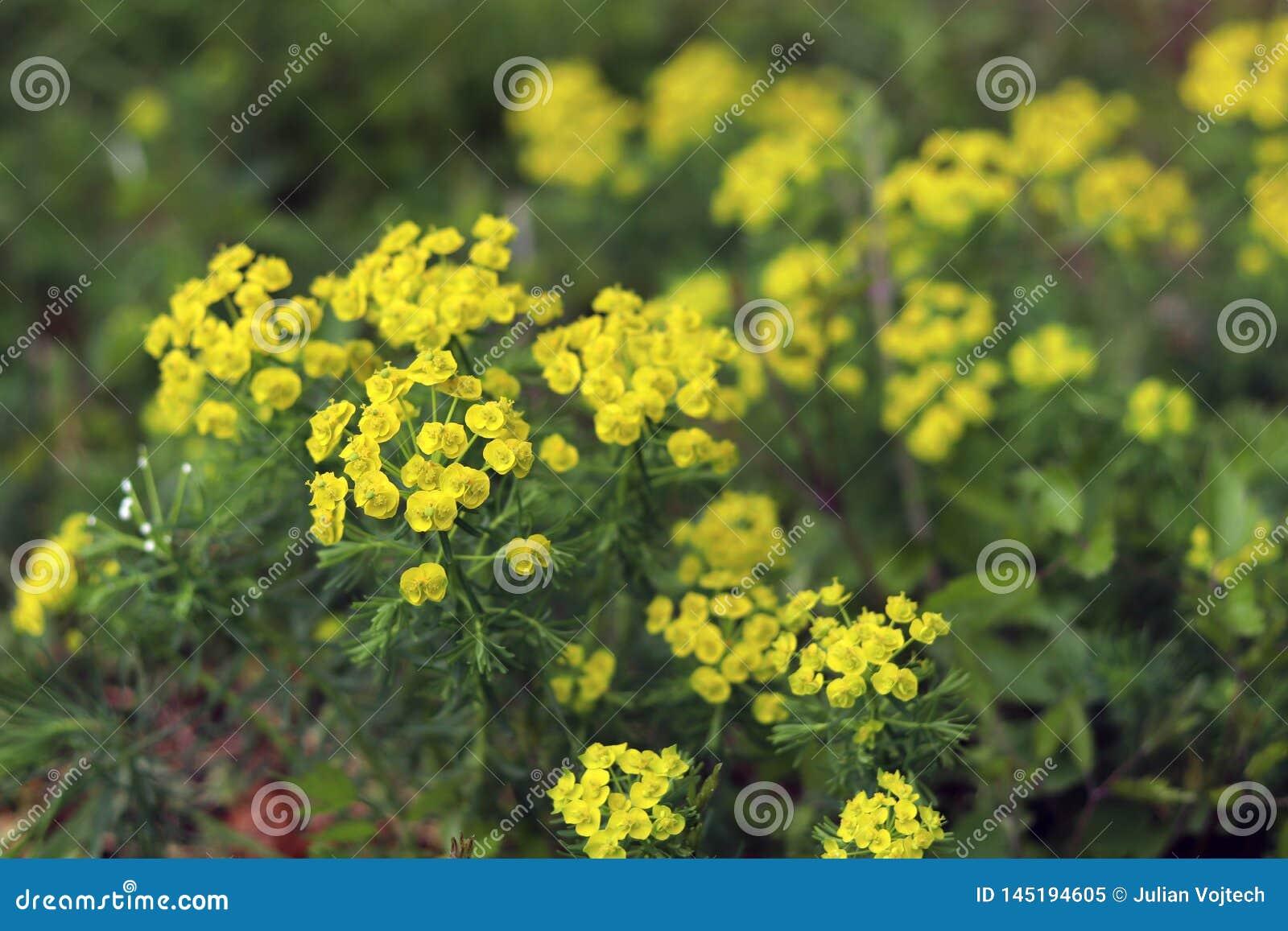 Fr?hlingslandschaftswiese mit Blumen naher hoher neutraler Hintergrund der Zusammenfassung