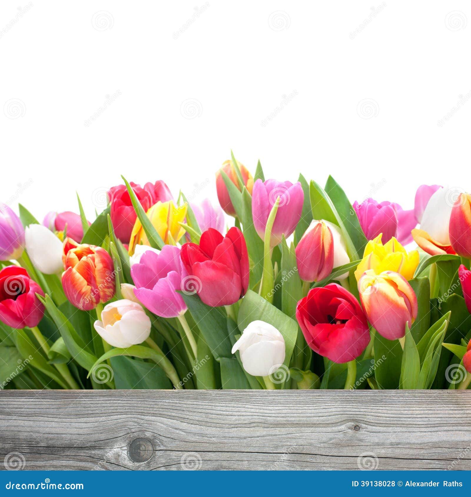 Frühlingstulpenblumen