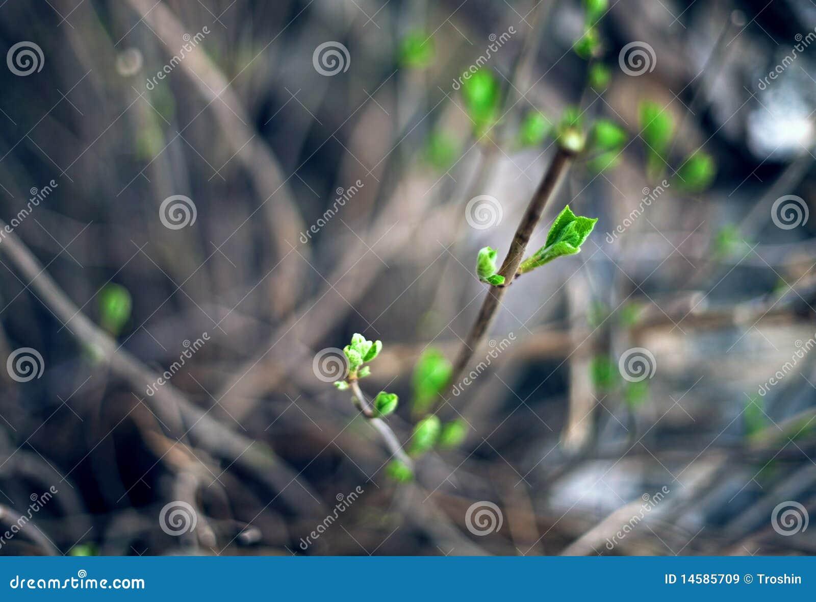 Frühlingswachstum