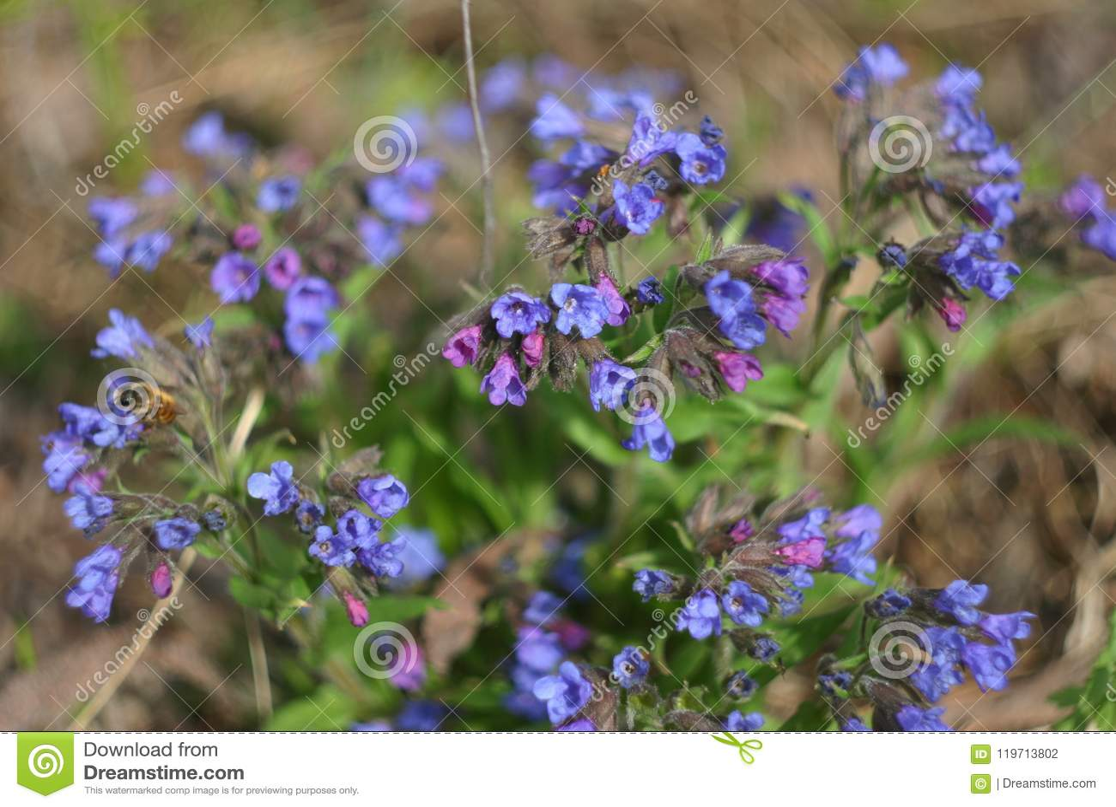 Frühlingswald blüht Nahaufnahme
