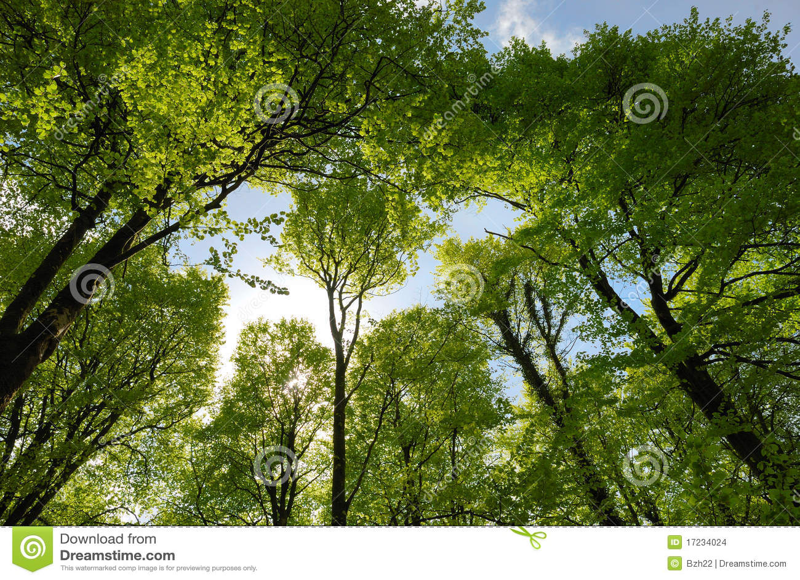 Frühlingswaldland