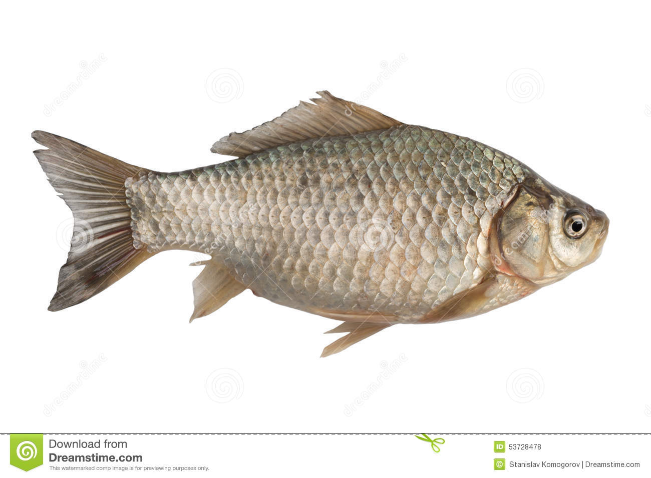 Fra chement carpe de crucian de poisson d 39 eau douce photo for Poisson eau douce