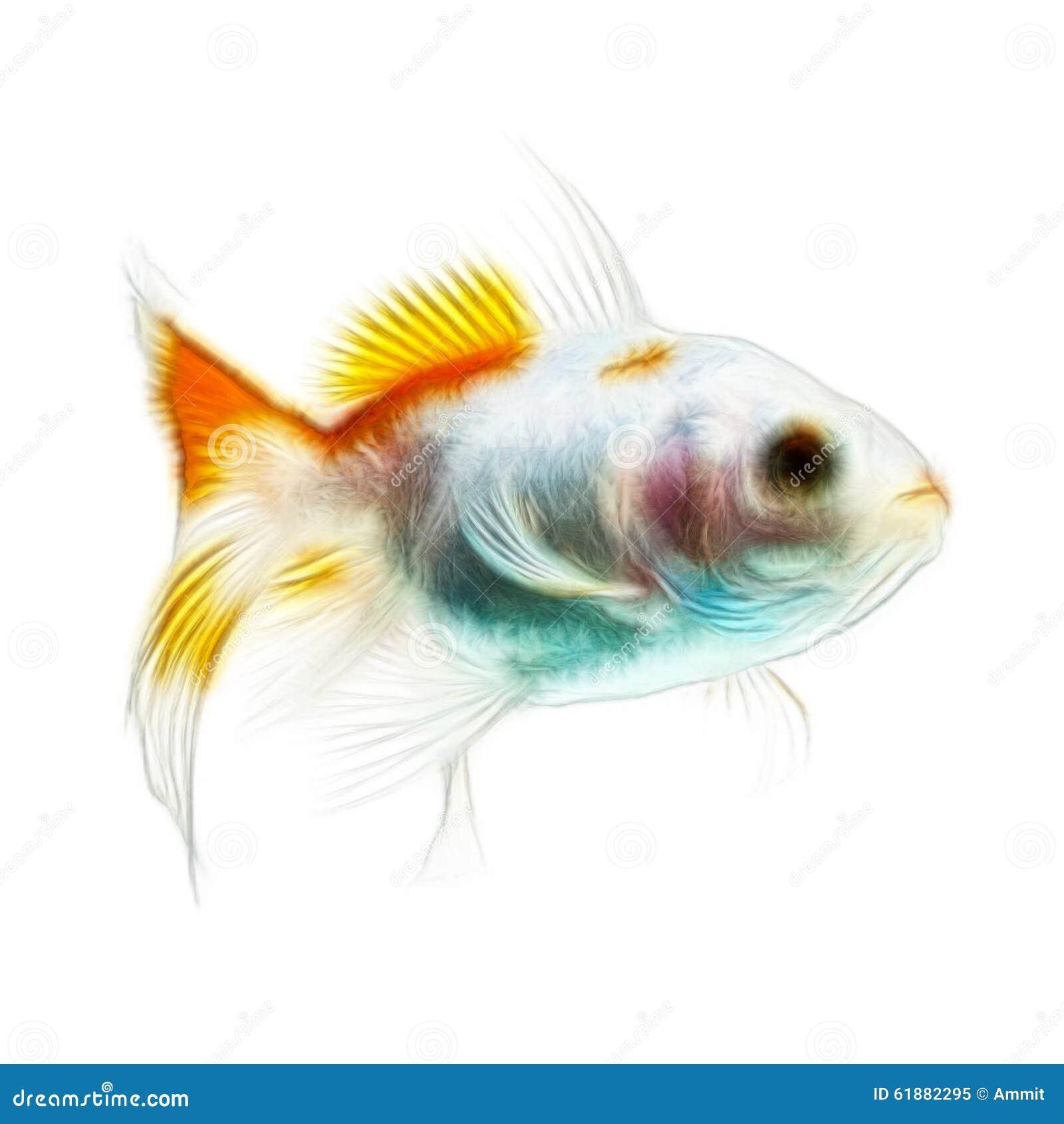 Fractales de poisson rouge d isolement sur le blanc