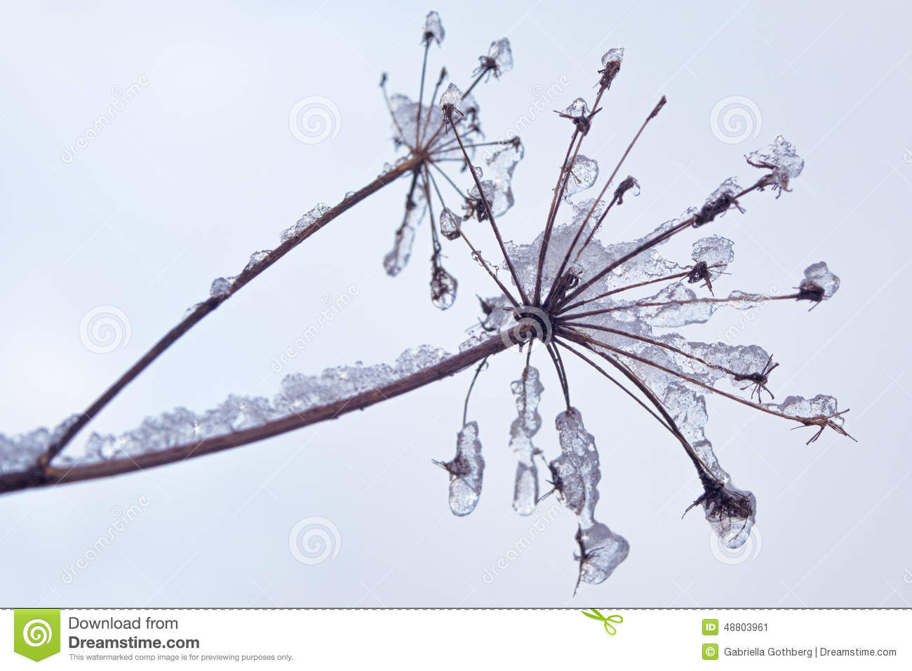 Fragile plant covered with ice and snow crystals