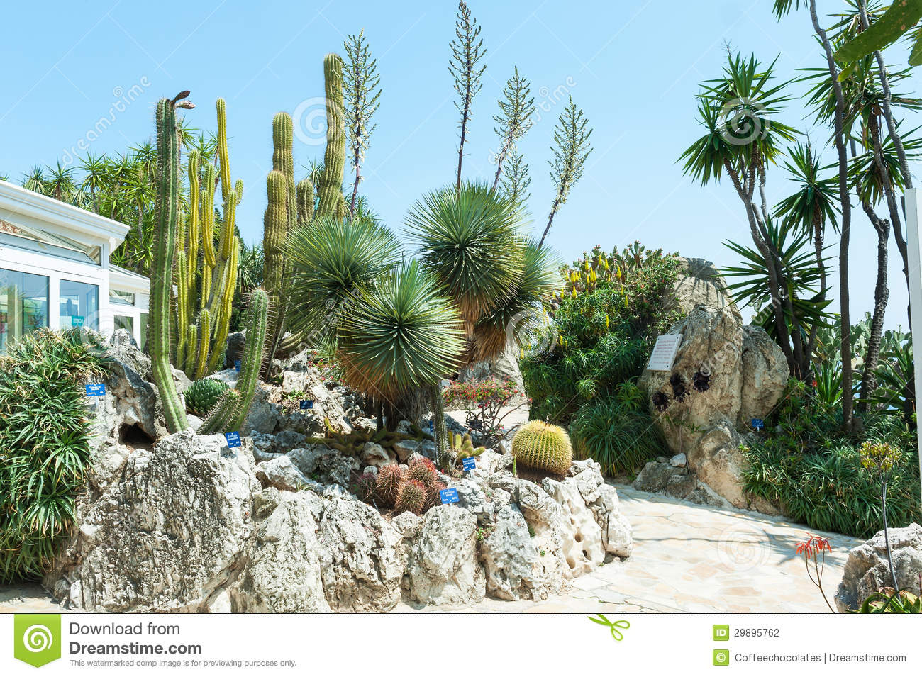 Garden cacti and succulents in monaco stock photo image for Jardin exotique