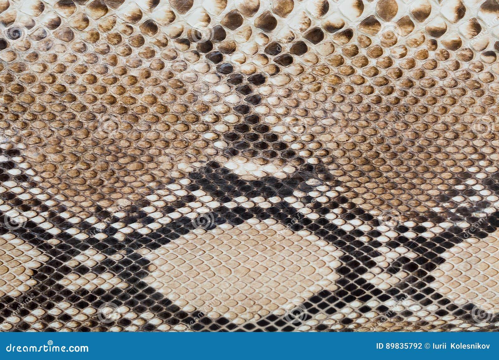 Fragment of of snake skin