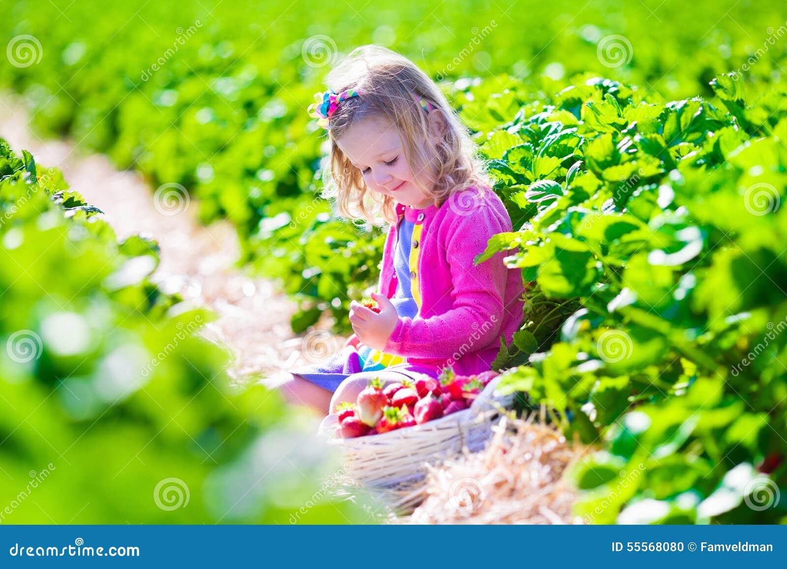 Fragola di raccolto della bambina su un azienda agricola