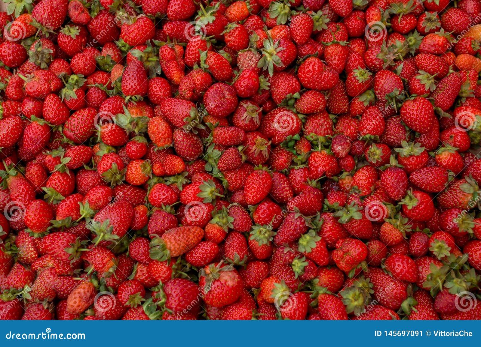 Fragola organica matura rossa fresca sul mercato degli agricoltori Fondo della bacca del primo piano Alimento sano del vegano