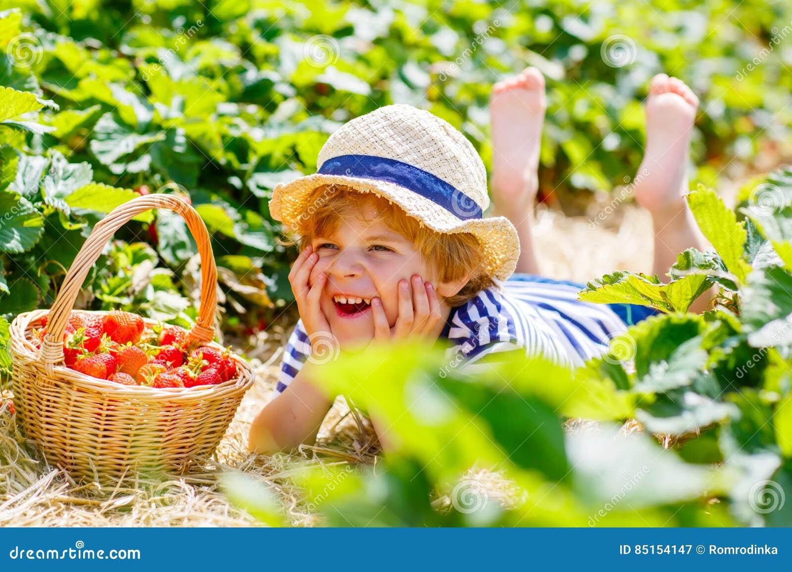 Fragole di raccolto del ragazzo del bambino sull azienda agricola, all aperto