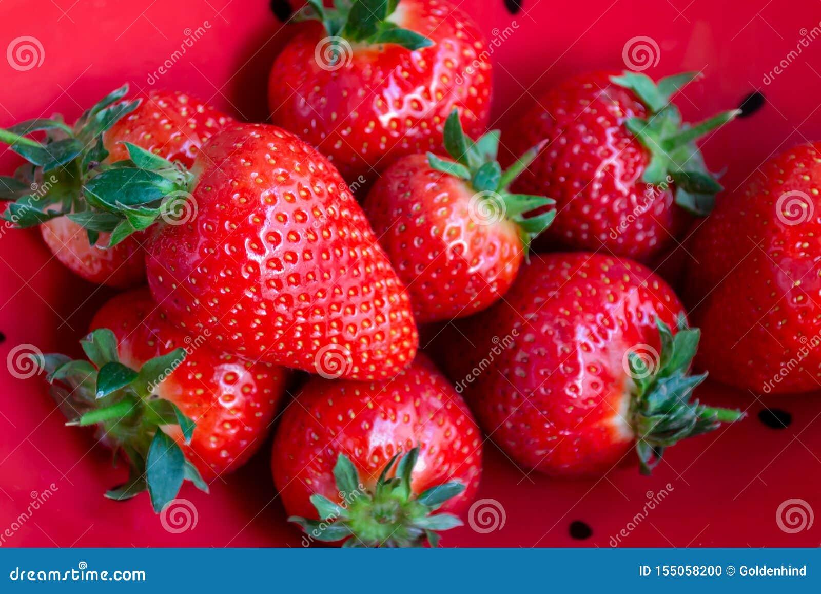 Fragole organiche fresche nel fondo rosso della ciotola