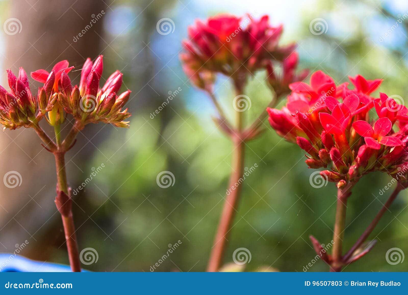 Fragrância de uma flor