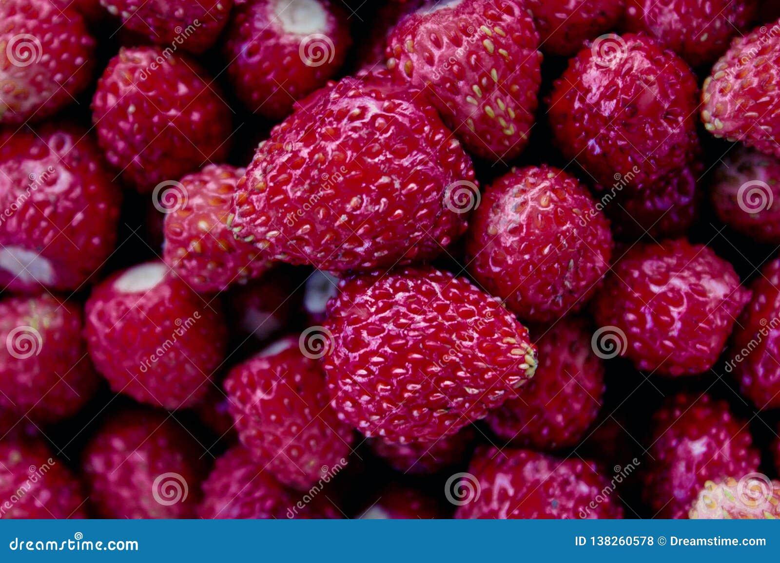 Le Jardin De Grand Mere fraises dans le jardin de la grand-mère en été photo stock
