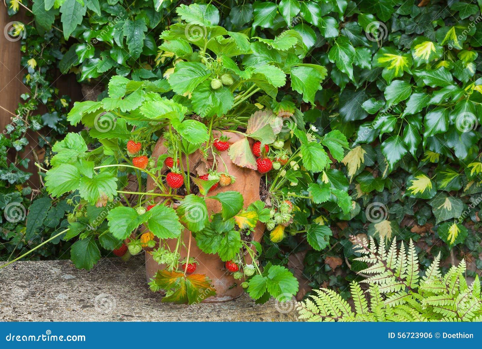 Pot fraisier terre cuite - Nain de jardin en terre cuite ...