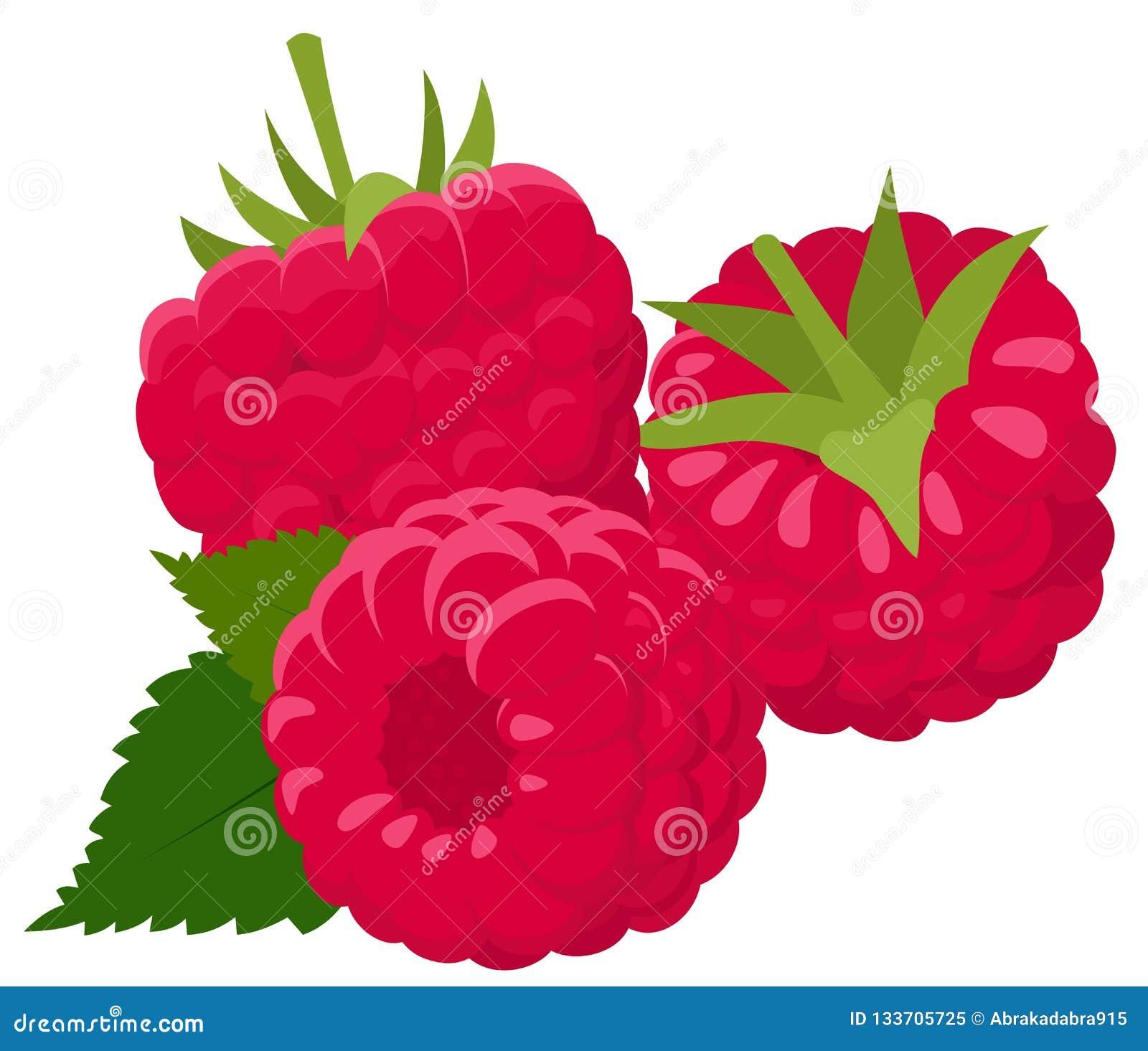 Framboesa isolada no fundo branco raspberries Baga da floresta Ilustração do vetor