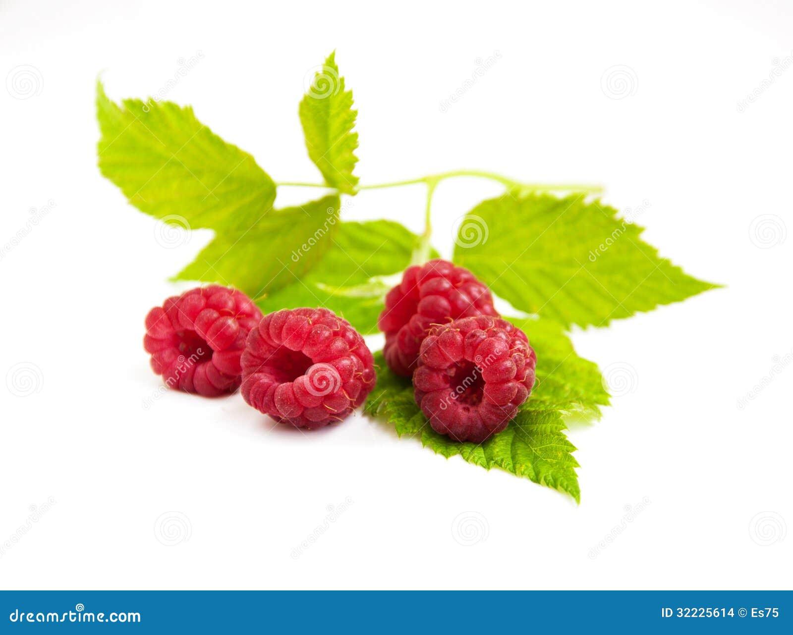 Download Framboesas frescas foto de stock. Imagem de vegetariano - 32225614