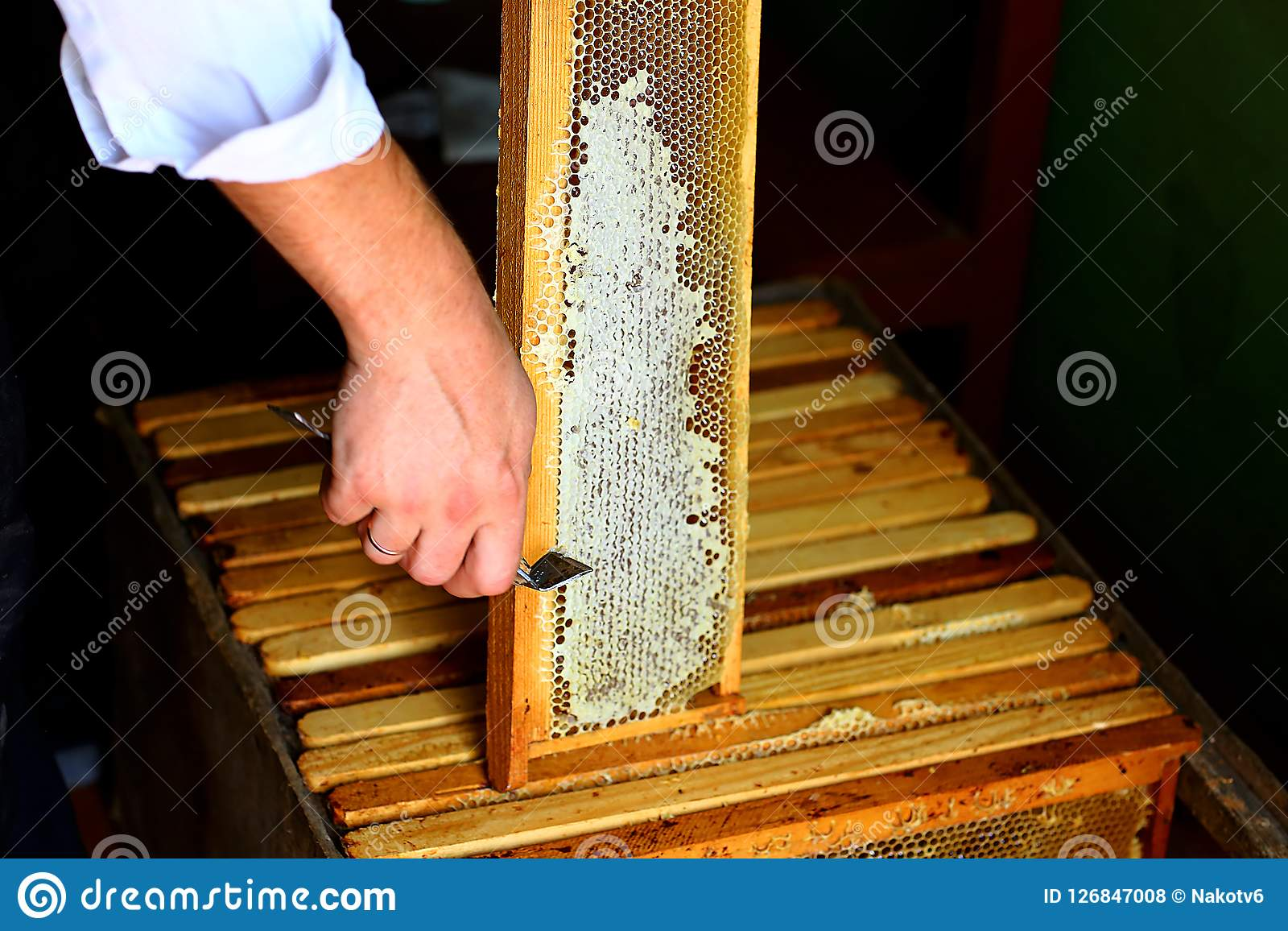Frame with bees. honeycomb with uncapping fork. Raw honey being harvested from bee hives. Beekeeping concept. Authentic lifestyle