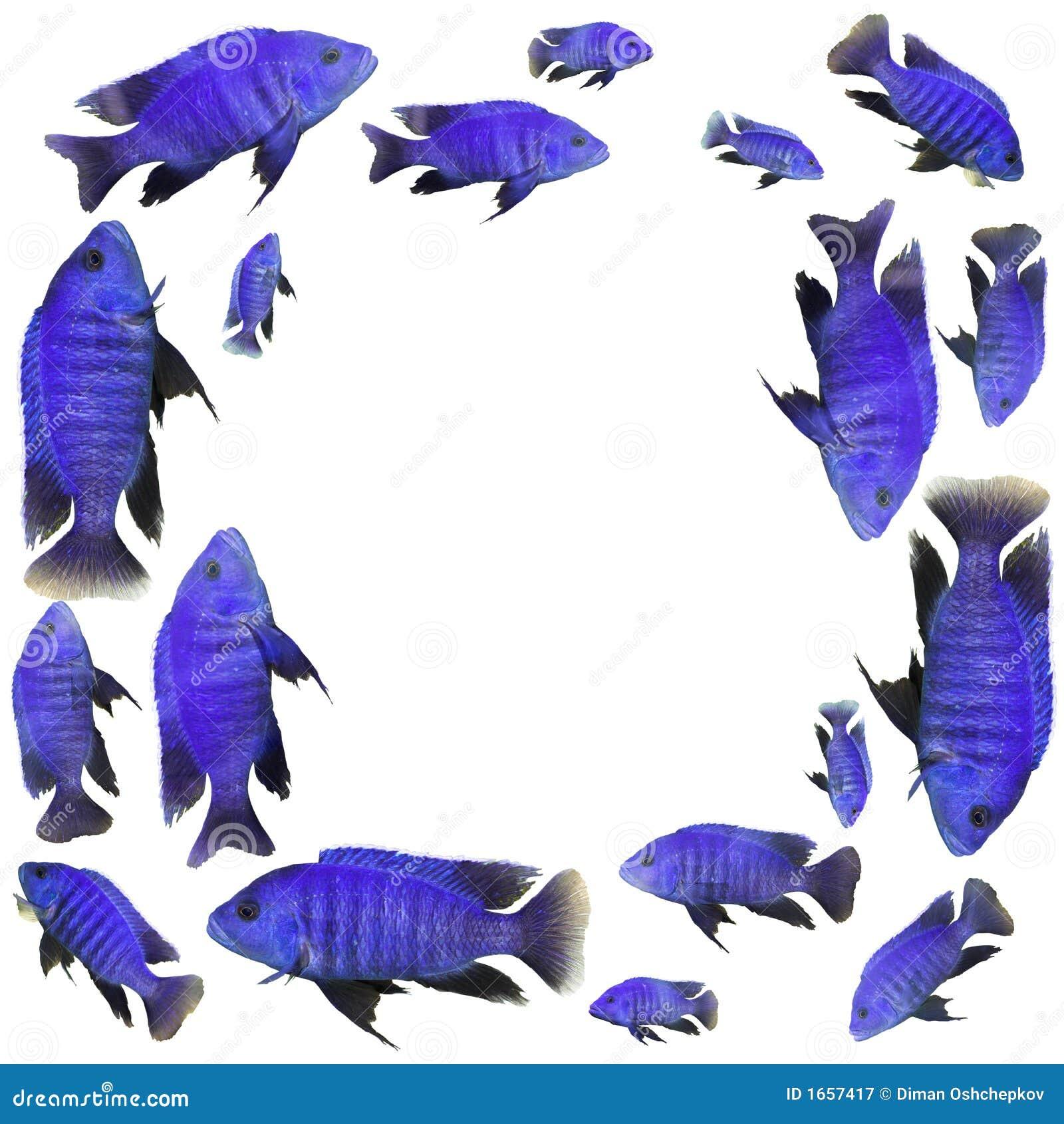 Frame with blue fish stock image. Image of aquarium, frame - 1657417