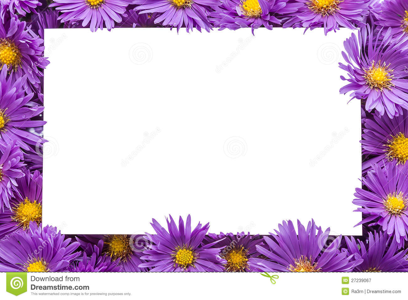 Frame / border of purple flowers with copy space. Isolated white ...