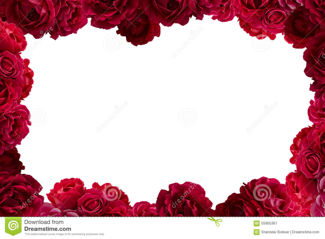 frame with bush of red rose flowers background isolated