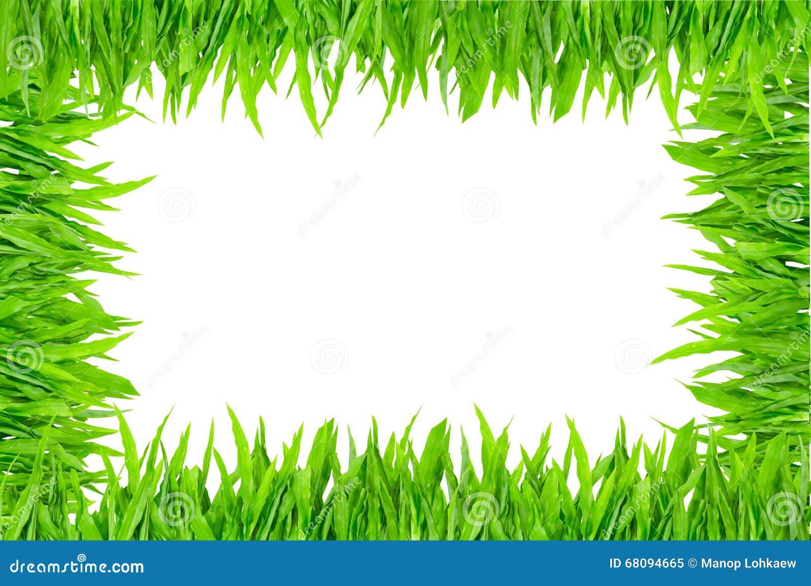 Frame da grama verde no fundo branco