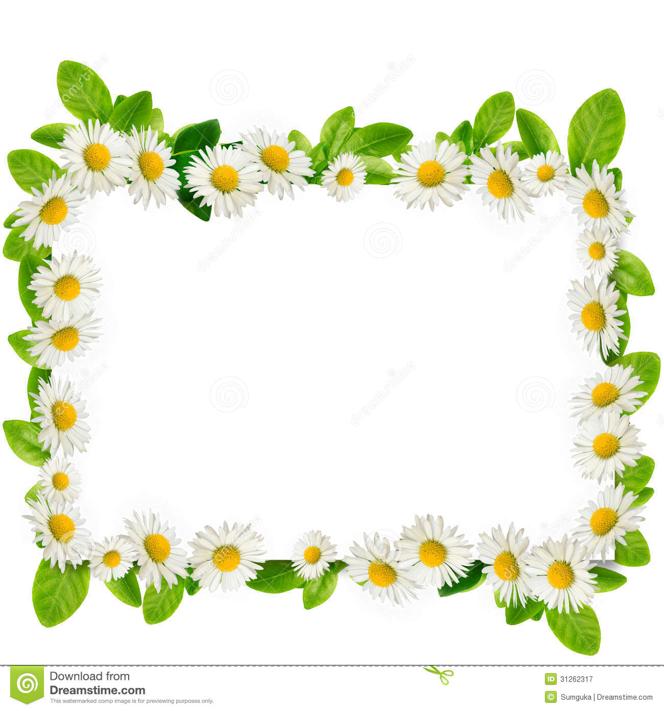 Frame: Daisies And Green Leaves Royalty Free Stock Photography - Image ...
