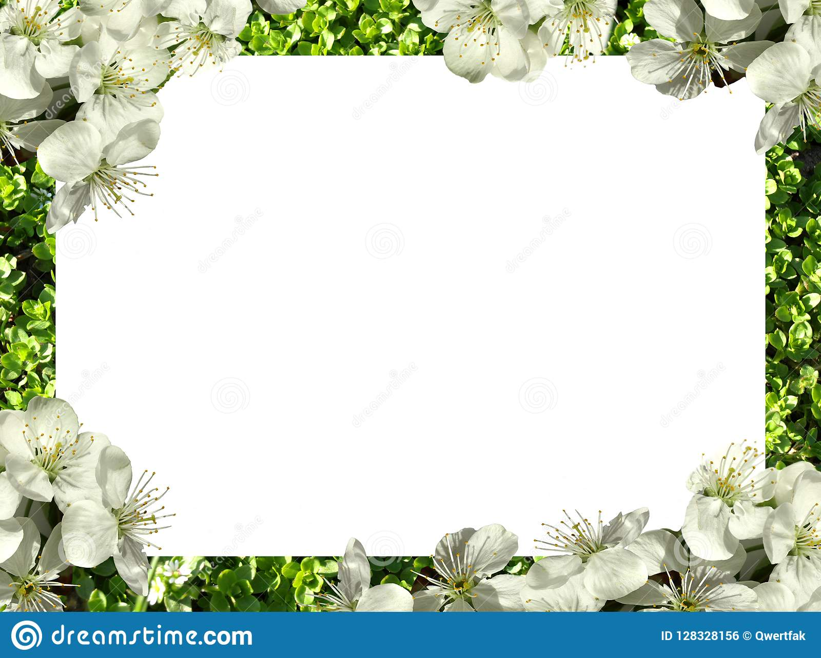 Frame Of Flowers Png Stock Photo Image Of Flora Border 128328156