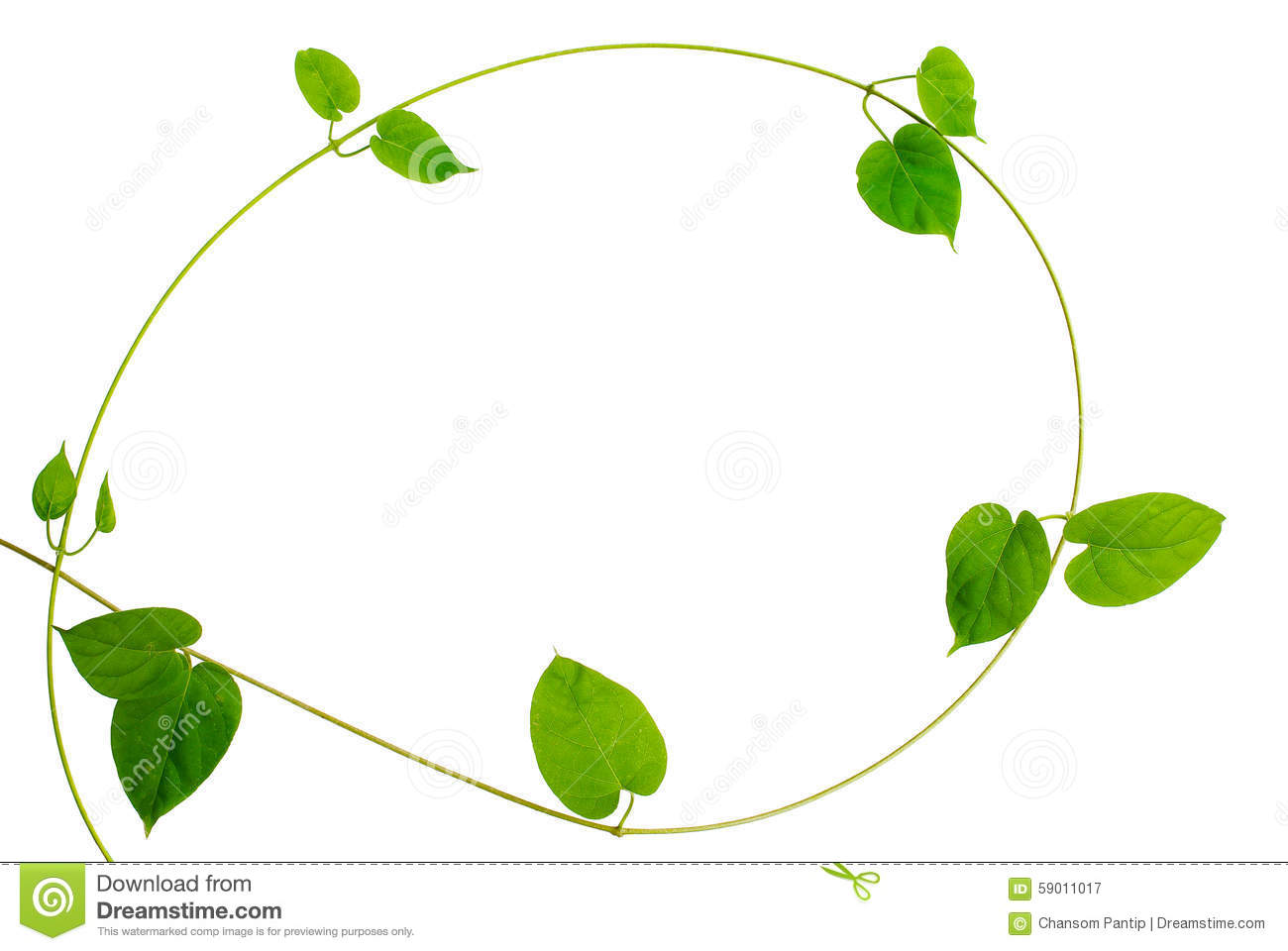 Frame Of Heart Shaped Green Leaf Vine On White Background Stock