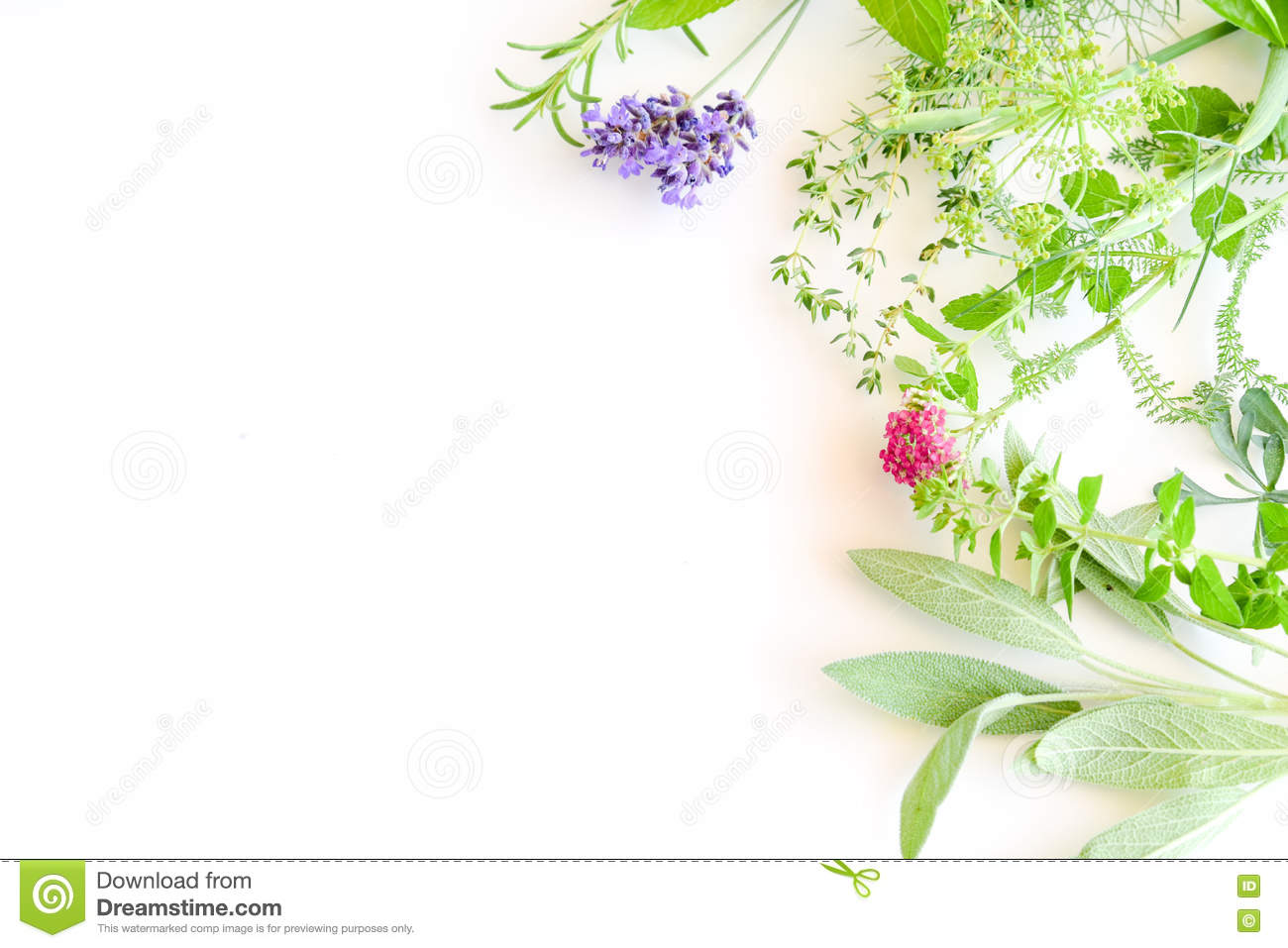 Frame Of Herbs On Wh