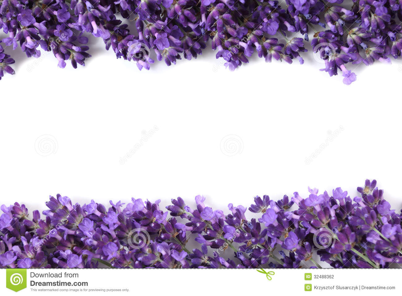 Frame with lavender stock photo image of lavender flora 32488362 mightylinksfo