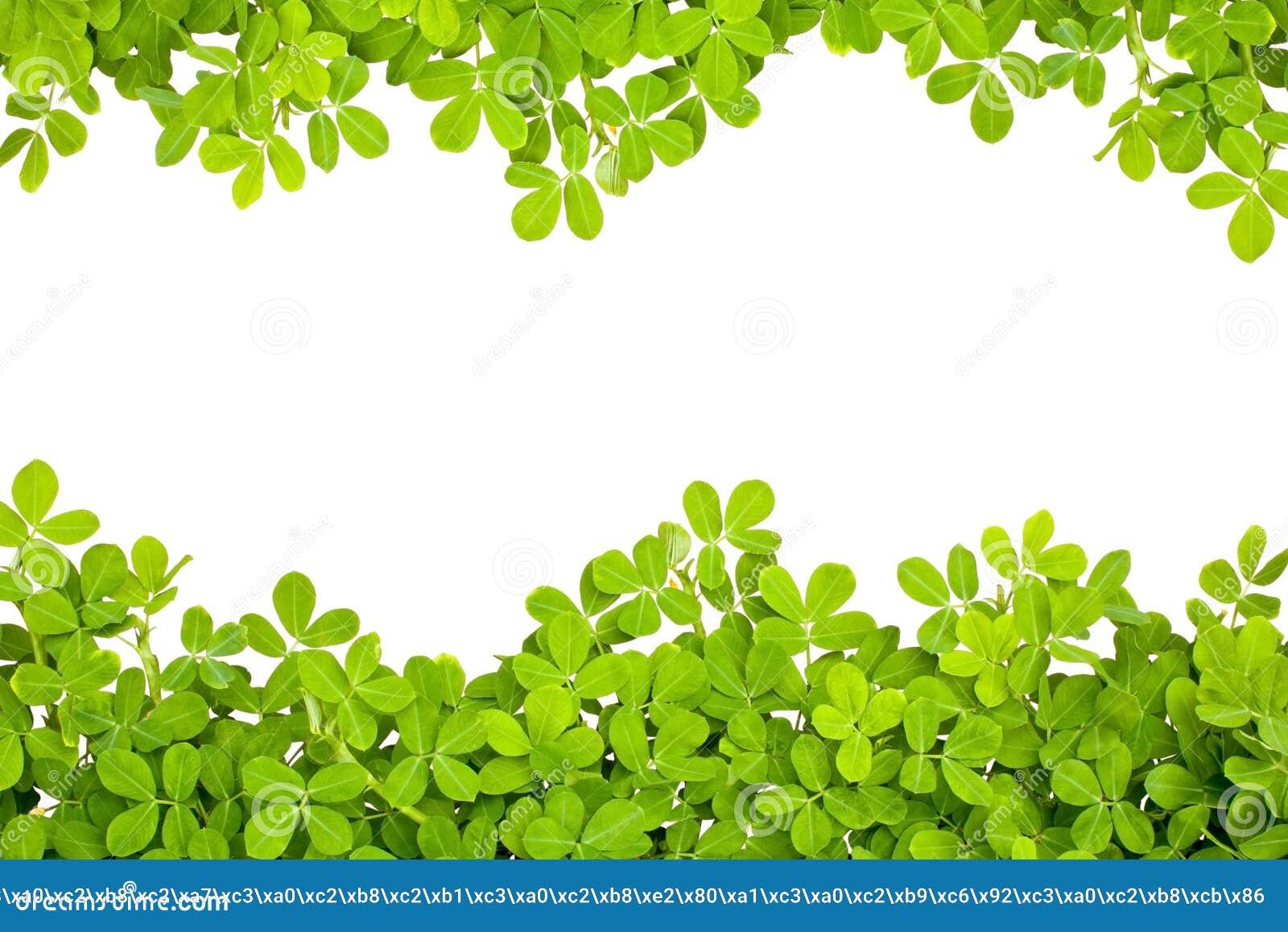 Frame leaves