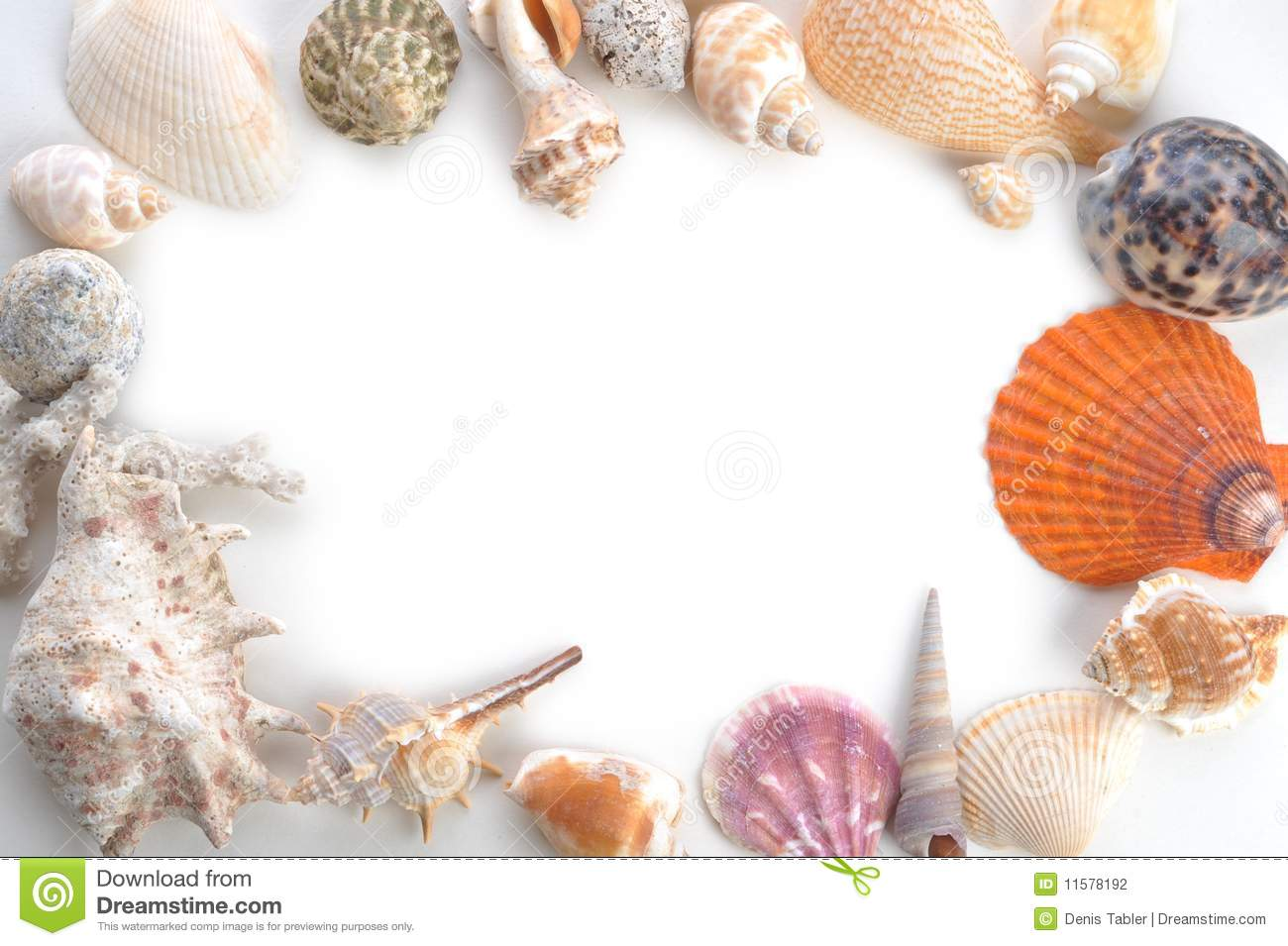 Frame made of sea shells stock photography image 11578192 for What are shells made of