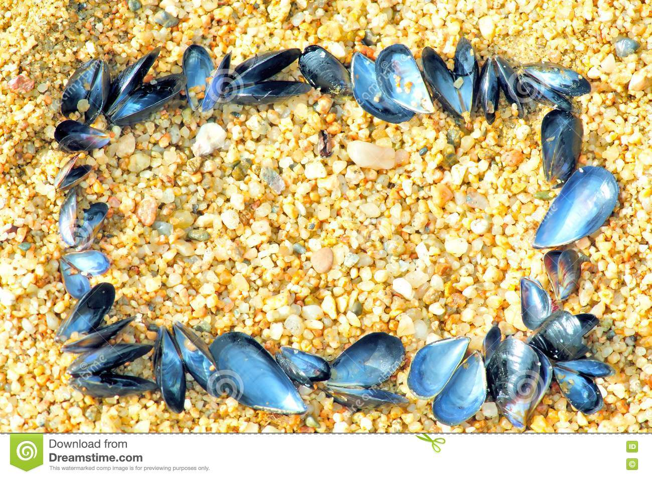 Frame made of sea shells royalty free stock images image for What are shells made of