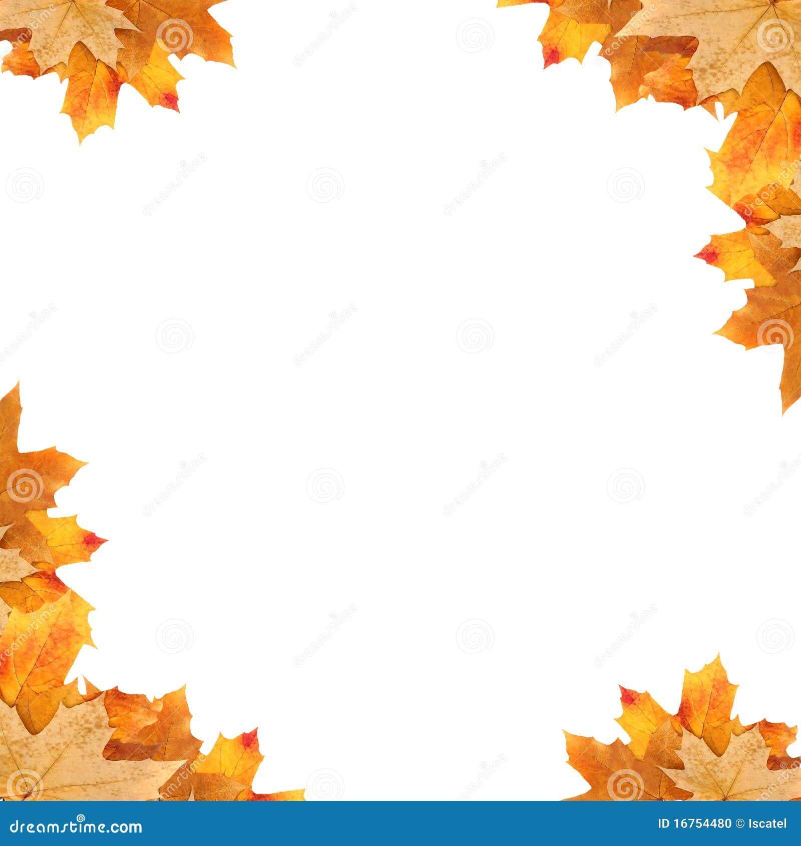 Frame Maple Leaves Stock Photo