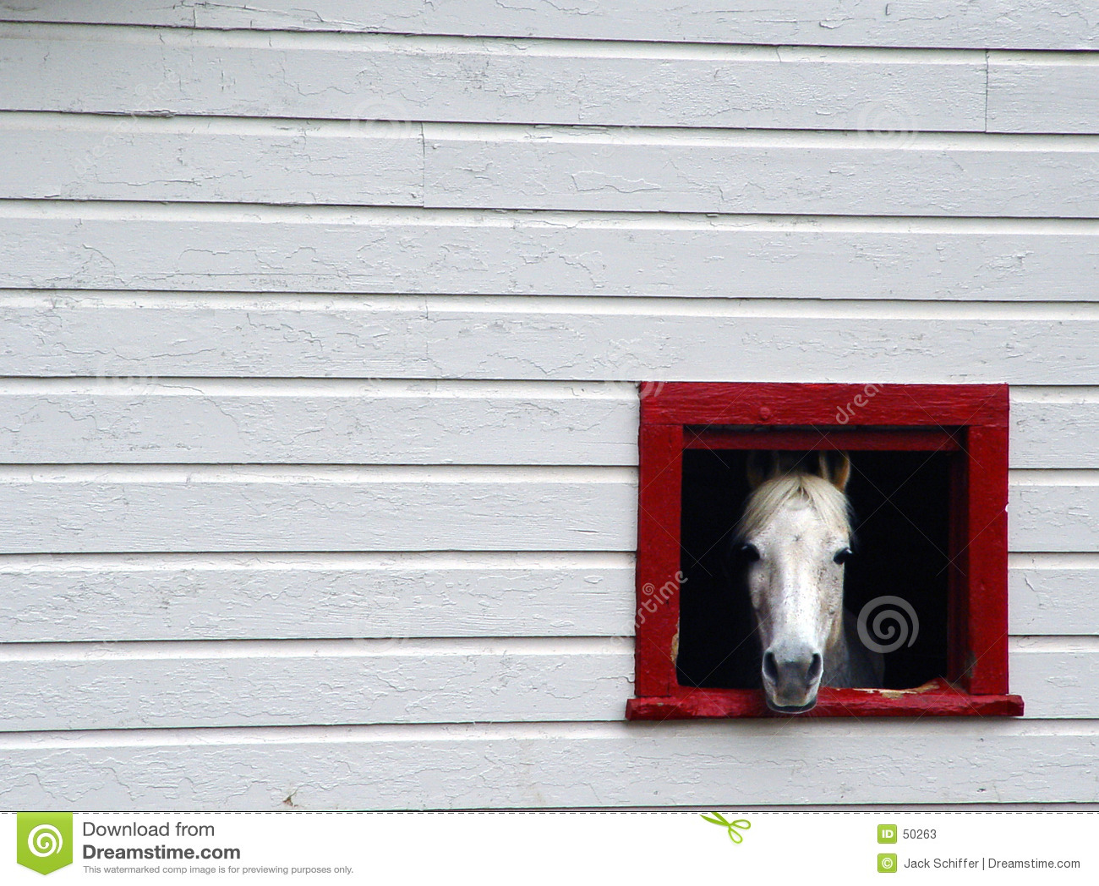 Frame Paard