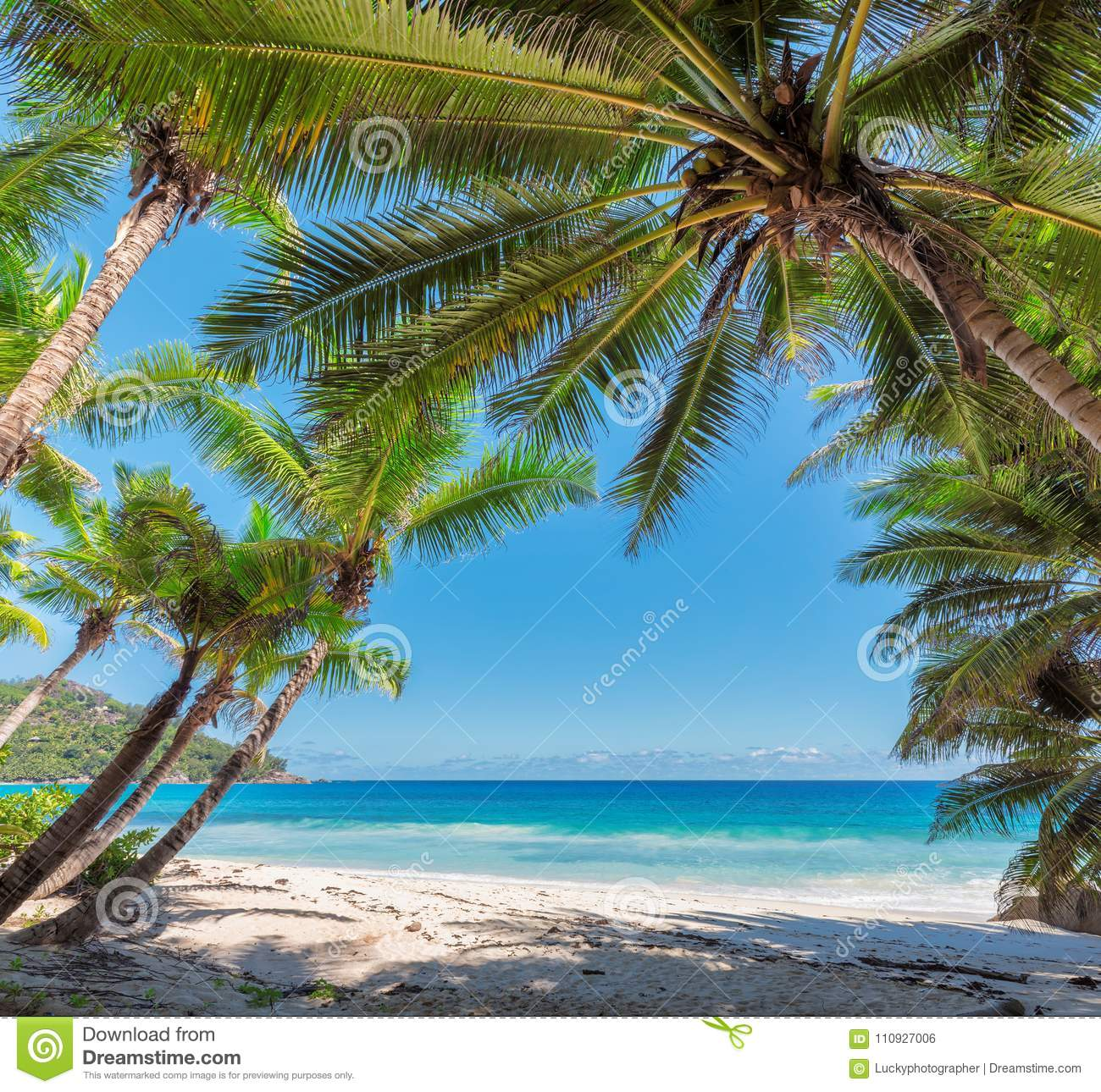 Seychelles Island Beaches: Frame From Palm Trees On A Beach In Seychelles, Mahe