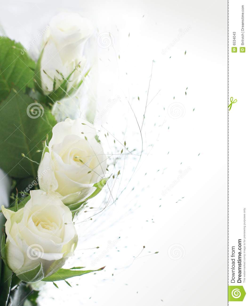 Frame Part With White Roses Stock Image - Image of floral, drip: 6534043