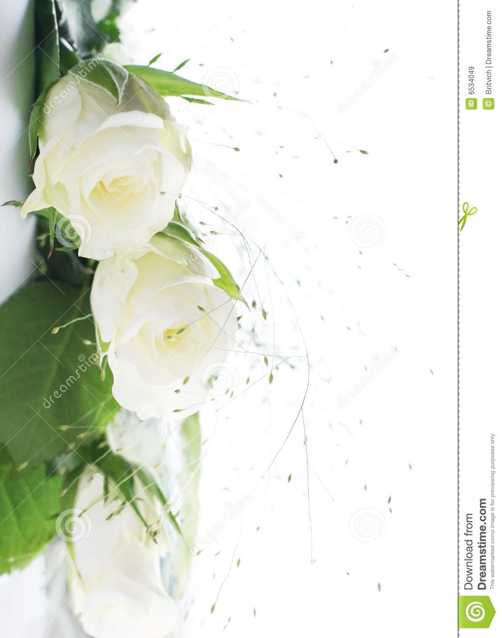 Frame Part With White Roses Stock Image - Image of drip, desire: 6534049