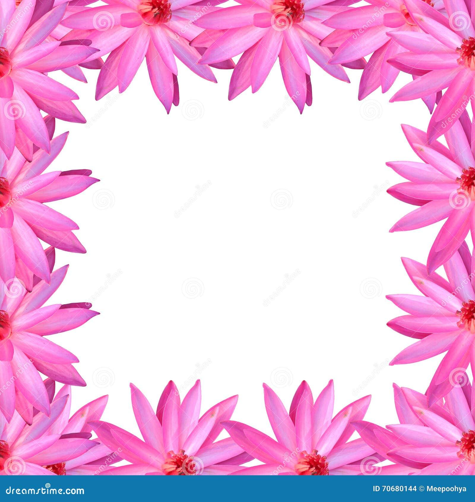 Frame Pink Lotus Isolated On White Background Stock Photo Image