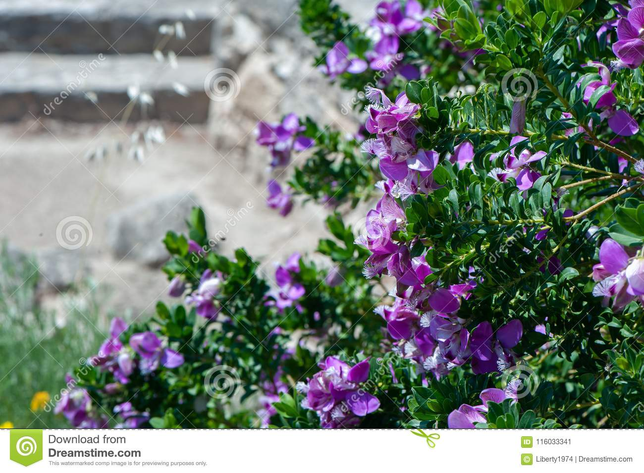 Frame of purple flowers,