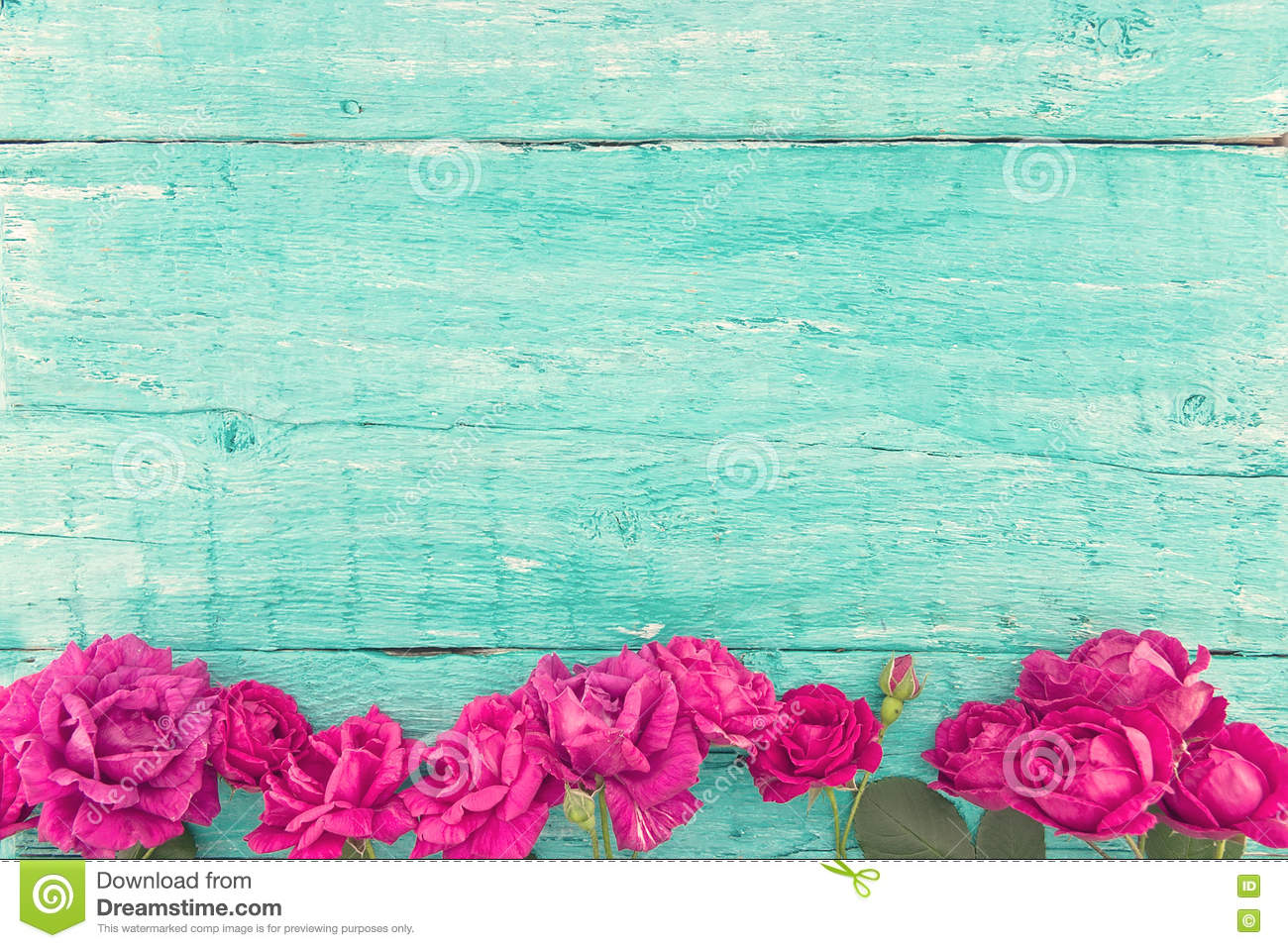Frame Of Roses On Turquoise Rustic Wooden Background. Spring Flo Stock Photo - Image: 77411157