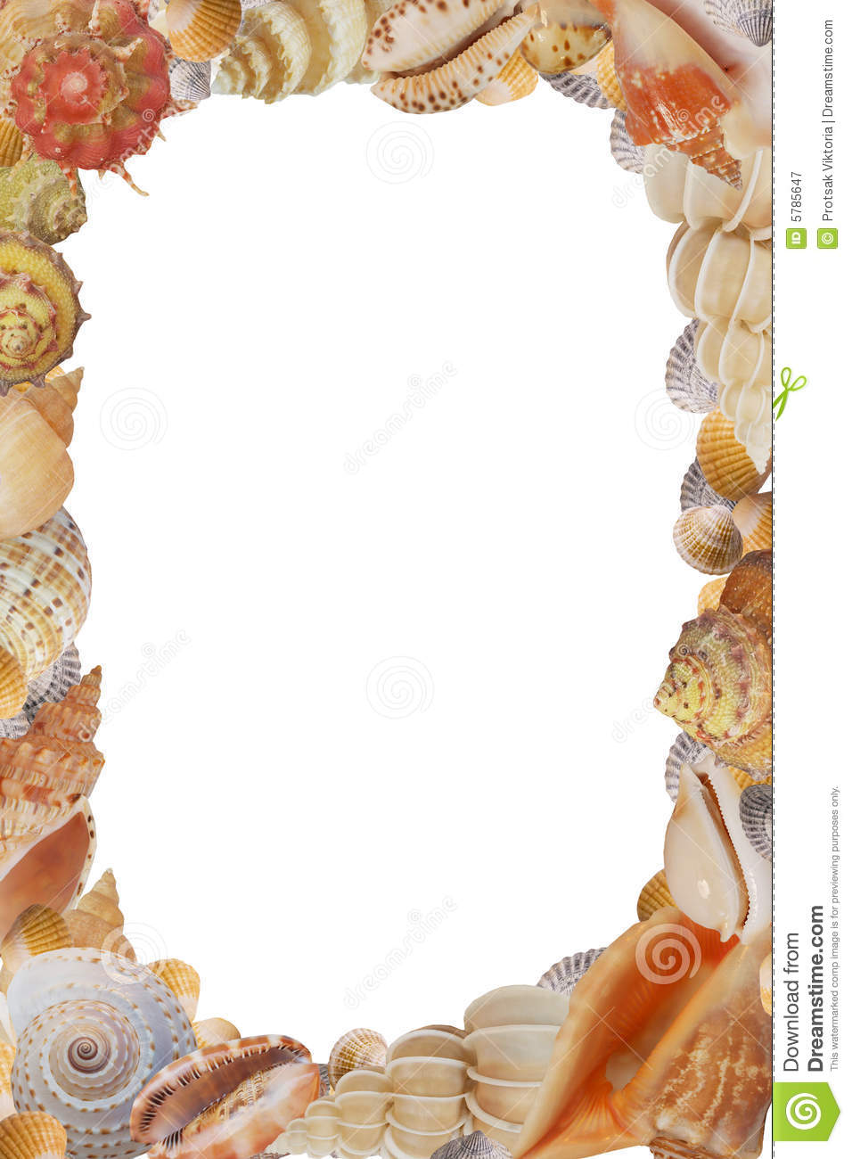 frame from sea shell stock image  image of natural  life