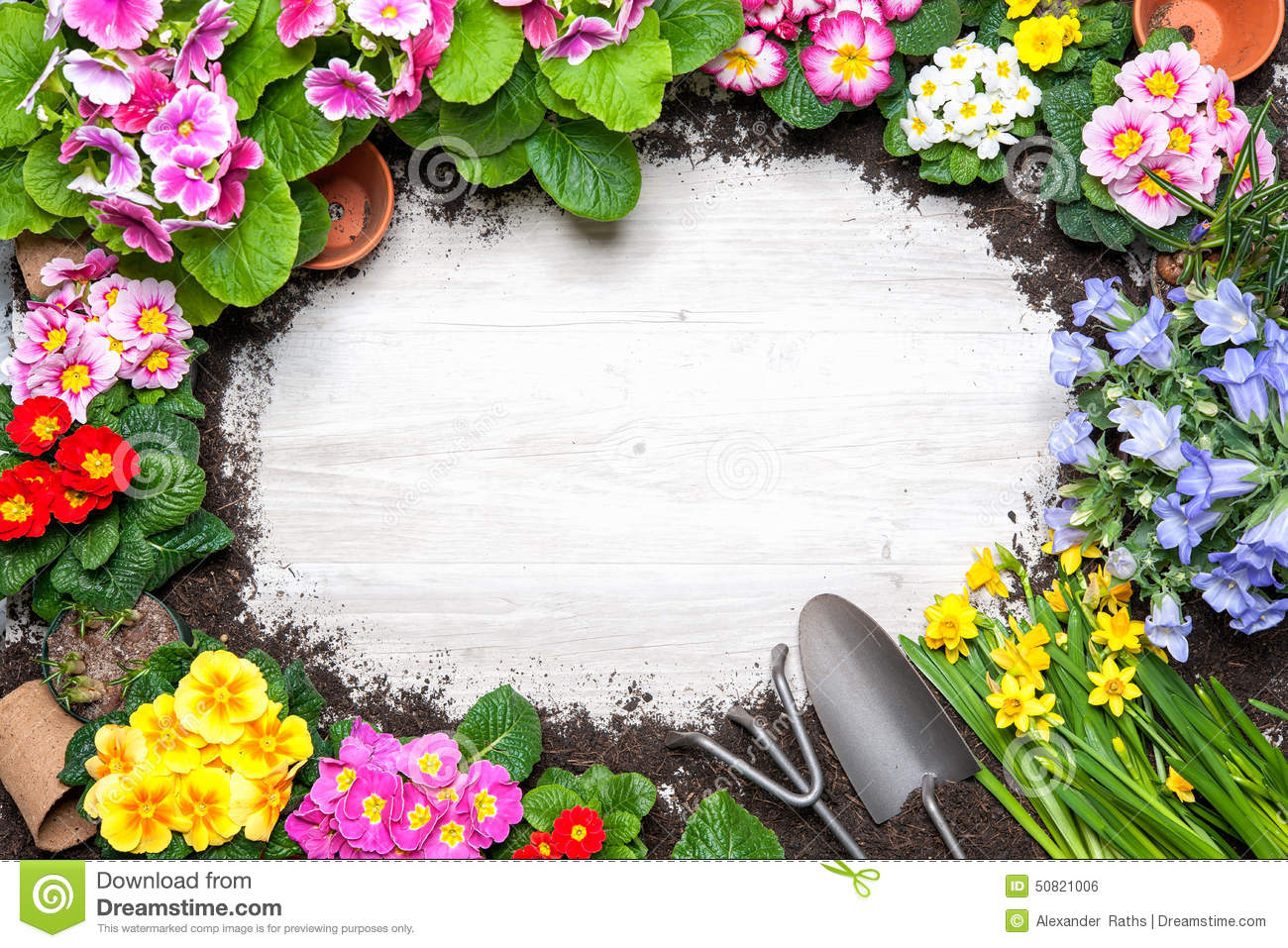Frame Of Spring Flower And Gardening Tools Stock Photo