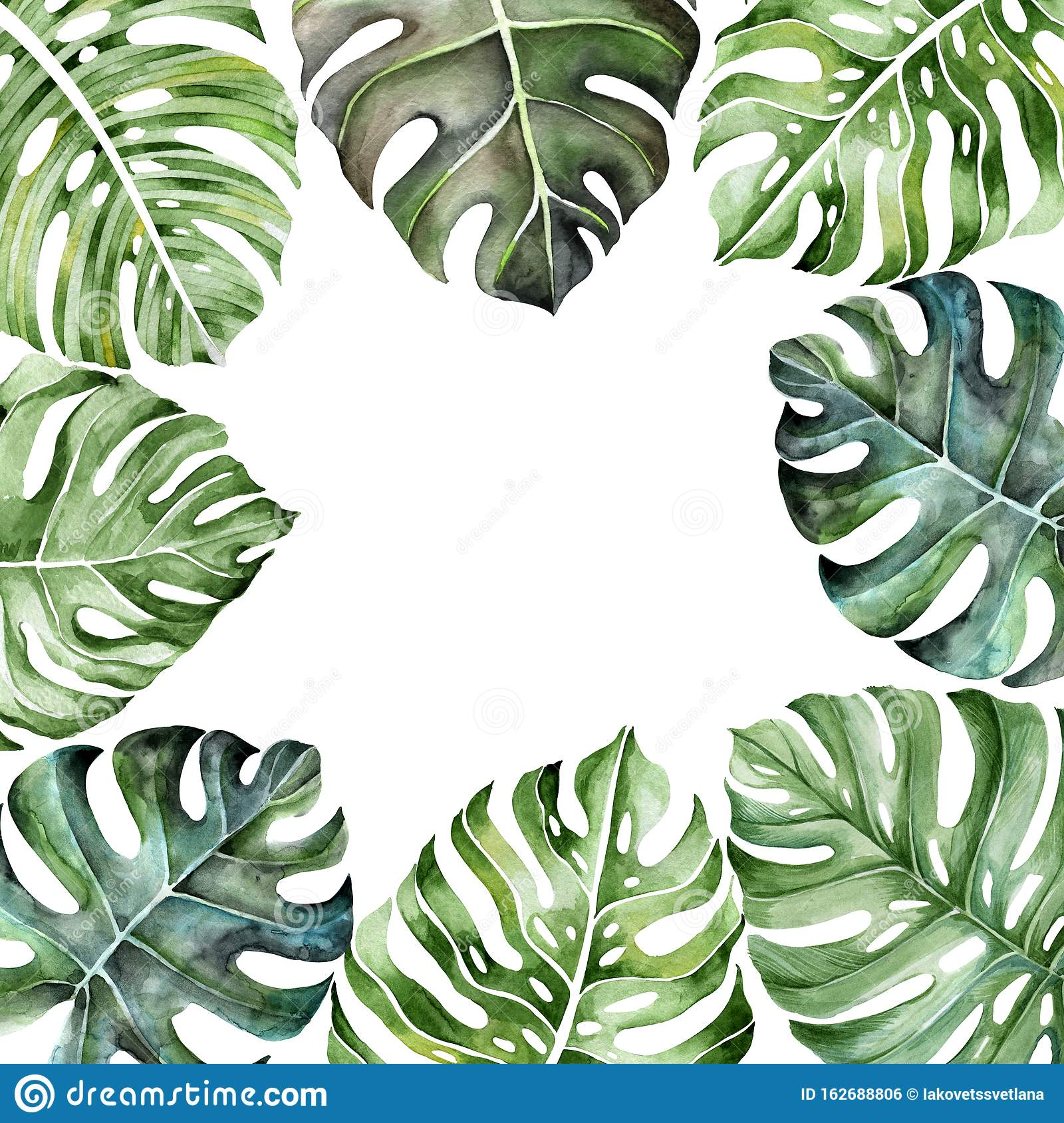 Frame Of Tropical Leaves Stock Illustration Illustration Of Leaves 162688806 Template brochure cover summer tropical with exotic palm leaves. https www dreamstime com frame tropical leaves template greeting card invitation big monstera watercolor illustration image162688806