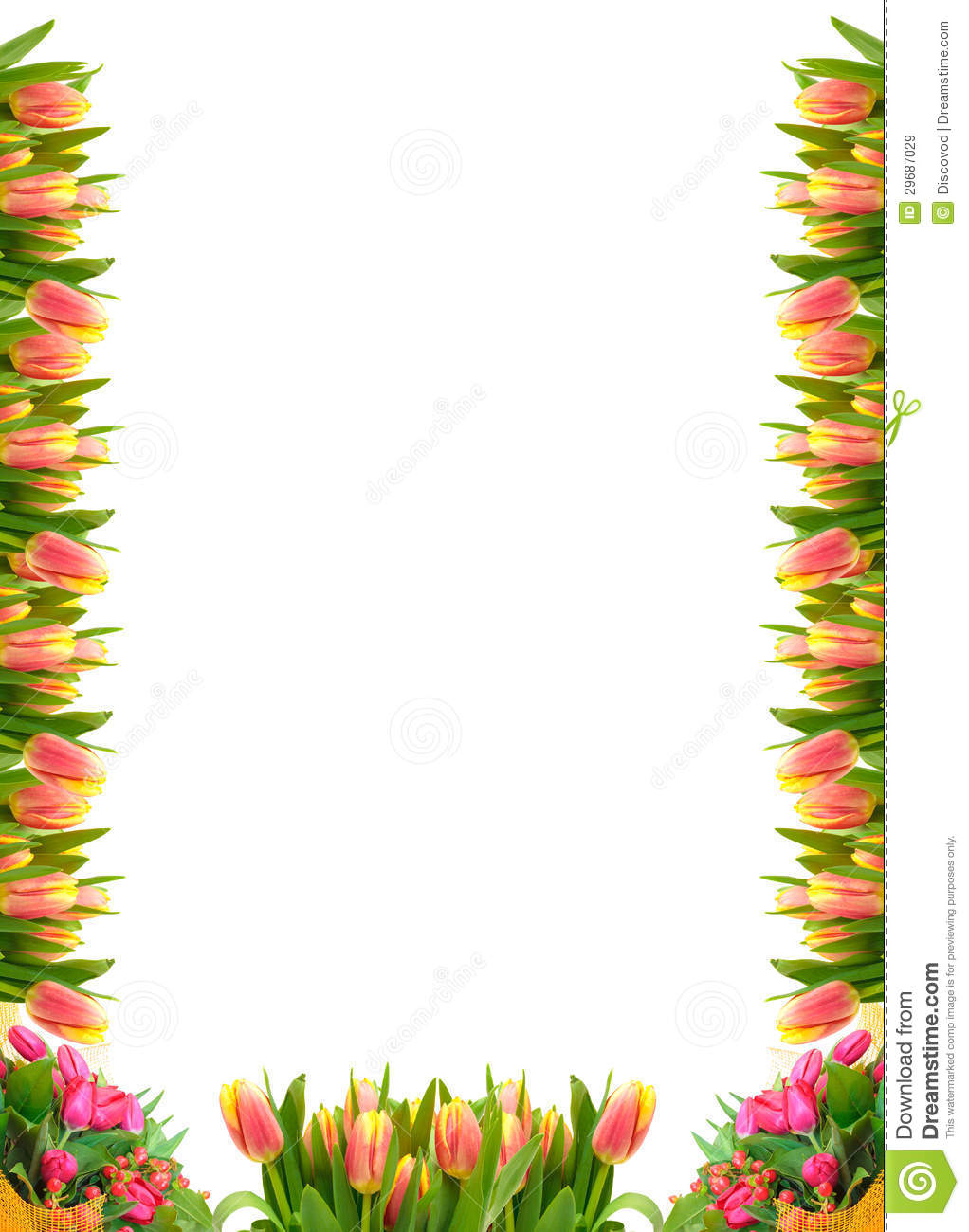 Frame Of Tulip Flowers Royalty Free Stock Images - Image: 29687029