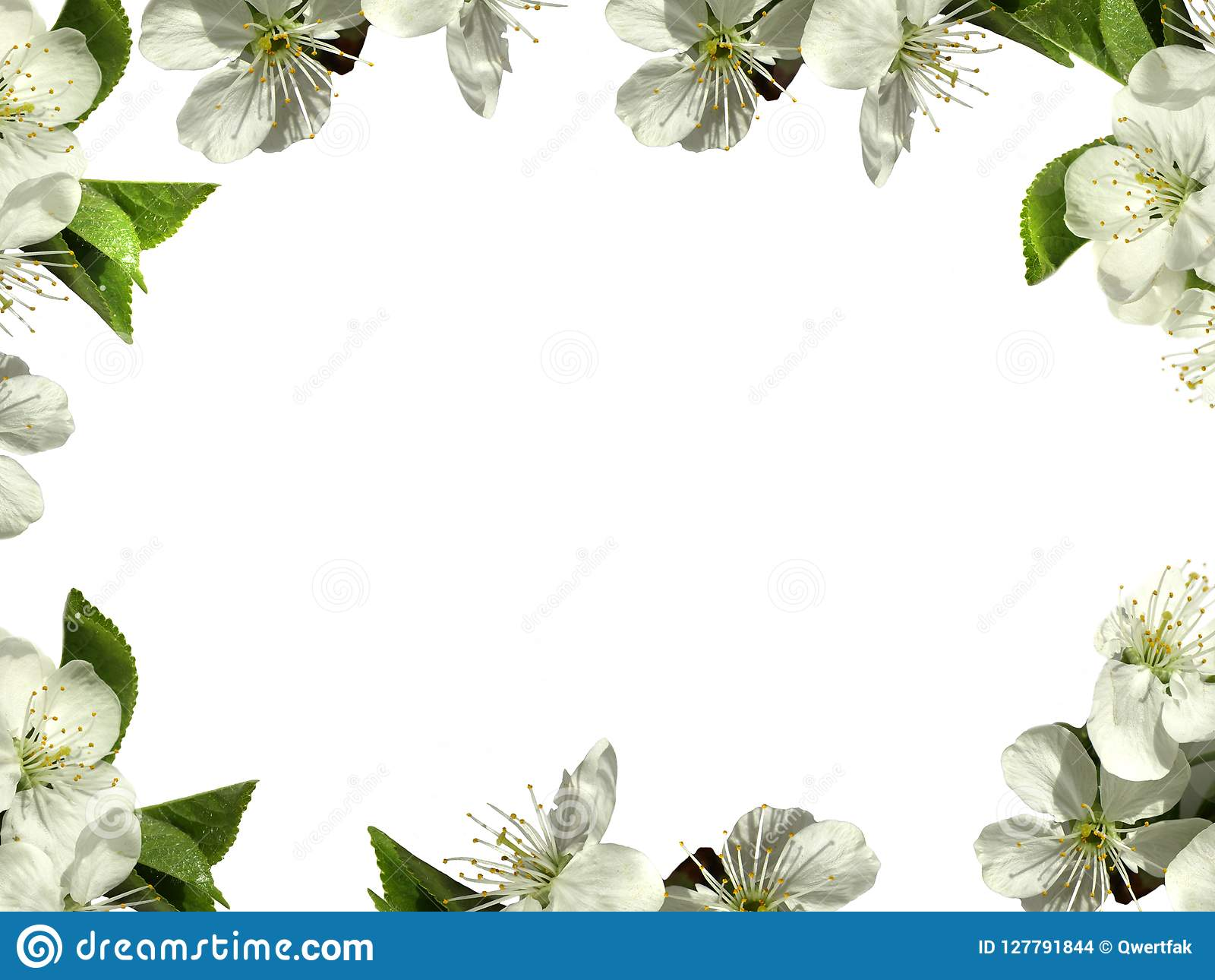 Frame With White Flowers Png Stock Photo Image Of File Books