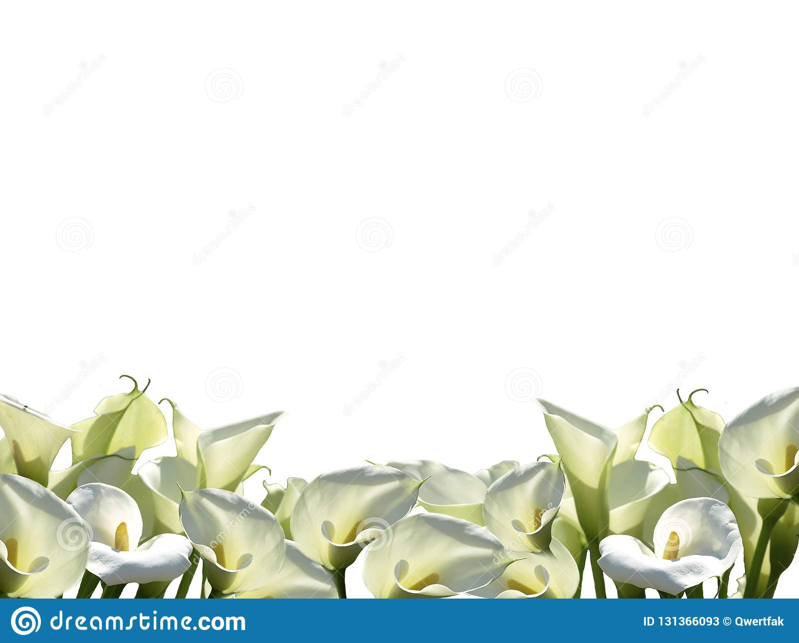 Frame Of White Flowers Png Stock Image Illustration Of Callas