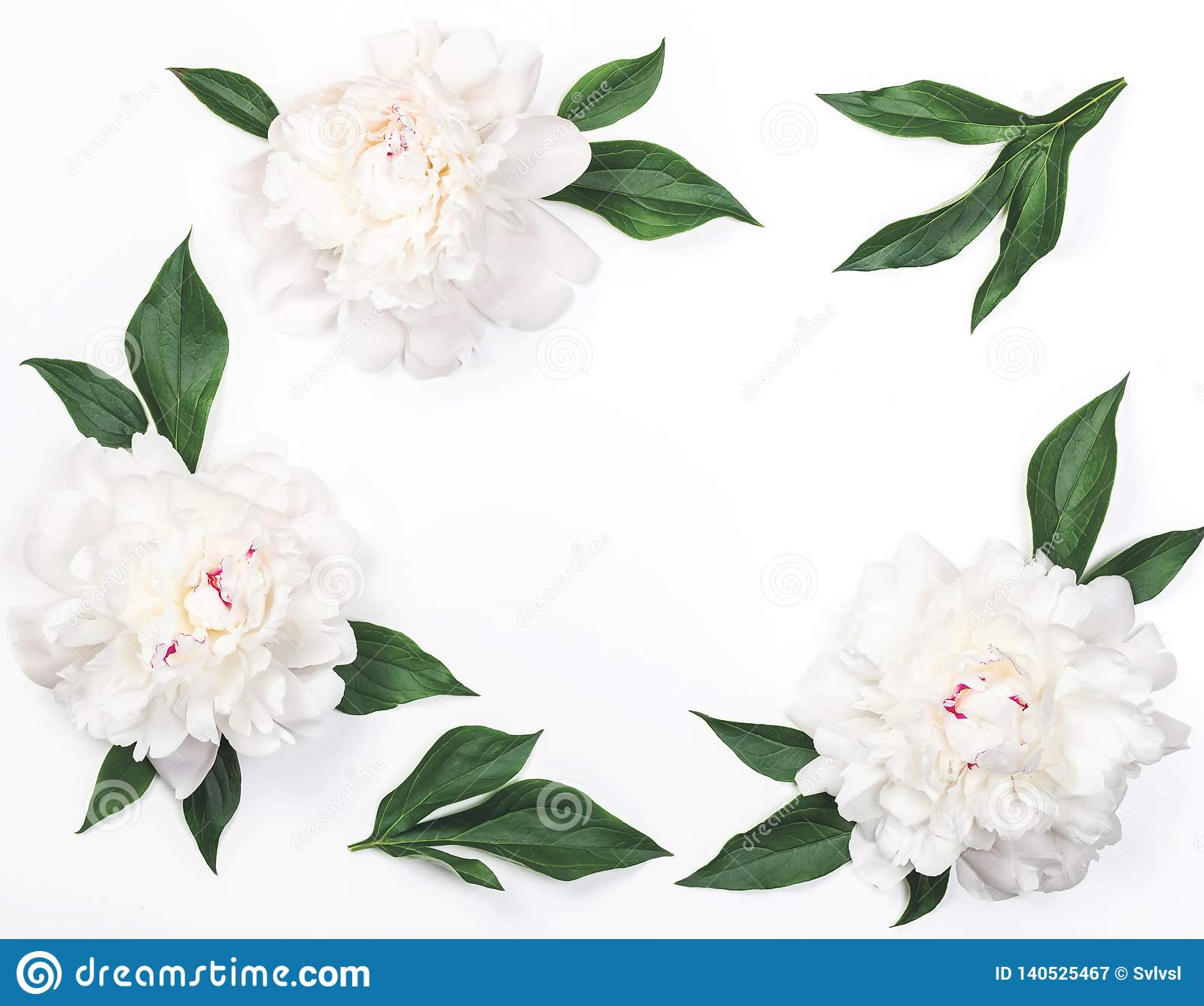 Frame of white peony flowers and leaves isolated on white background. Flat lay.